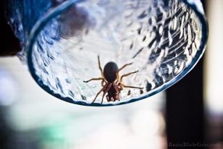 Spider Photo 1